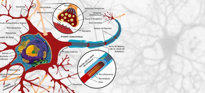 red-neuronal-columna-pedro-serrano